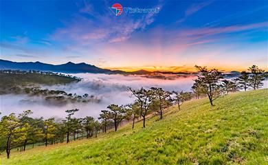 Săn Mây - Đồi Chè Cầu Đất – Tulutula Coffee - Chùa Linh Phước