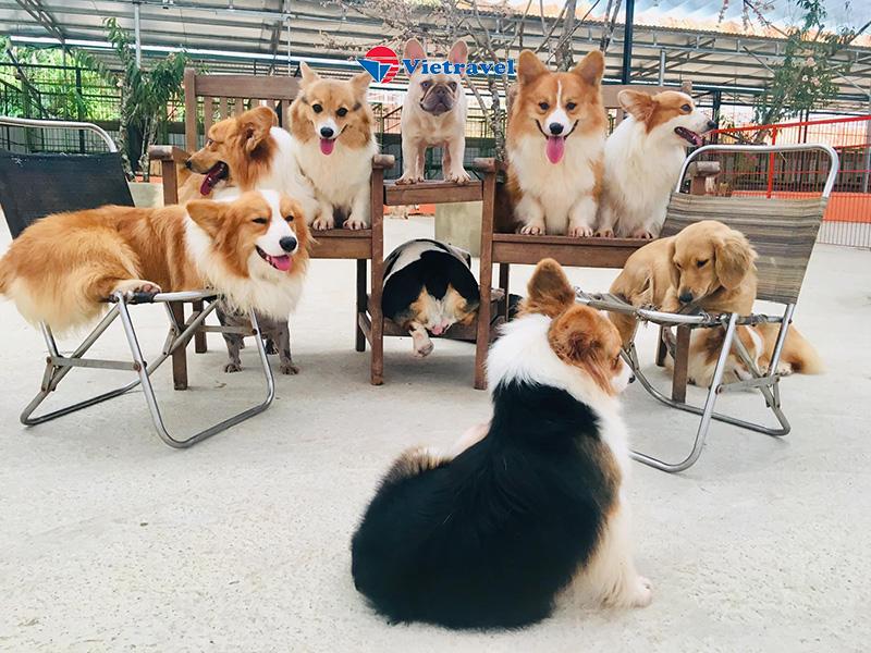 Đà Lạt - Puppy Farm - Phân Viện Sinh Học - Đồi Chè Cầu Đất - Đường Hầm Đất Sét (Khách sạn 4*. Tour Tiết Kiệm)
