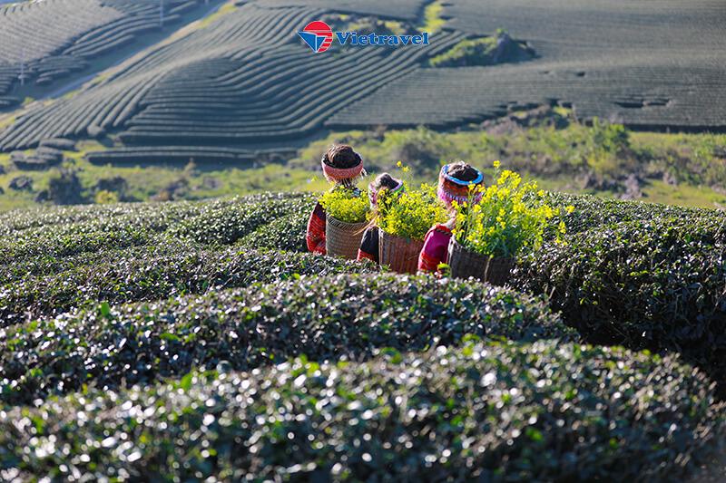 Hà Nội - Mai Châu - Mộc Châu - Những mùa hoa (Khách sạn 3 - 4 sao)