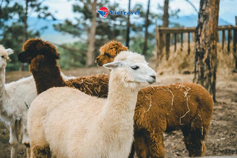 Đà Lạt - Đam B'ri - KDL Kim Ngân Hills - Fairytale Land - Cà Phê Mê Linh (Khách sạn 4*. Tour Tiết Kiệm)