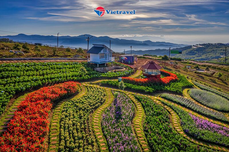 Bay cùng Vietravel Airlines: Đà Lạt - Đồi Chè Cầu Đất - Cánh Đồng Cẩm Tú Cầu – Kim Ngân Hill